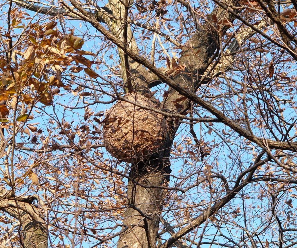 樹木につくられた巣